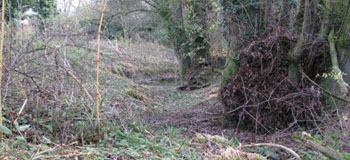 Bures Mill old channel Dec 2009