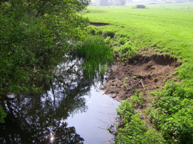 Bankside erosion along the River Colne, Fordham