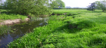 River Colne downstream of Fordham